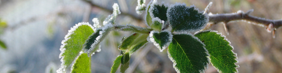 foglie inverno