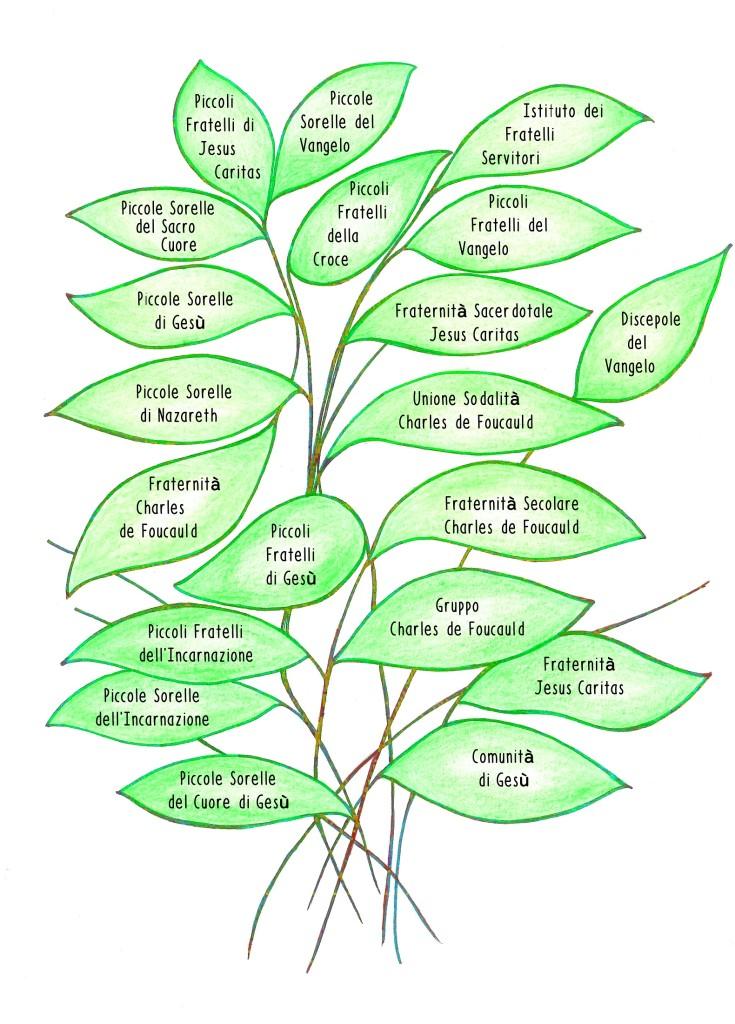 albero_famiglia_foucauldiana2